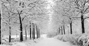 Uzmanlar Kış Ayı İçin Vatandaşları Uyardı
